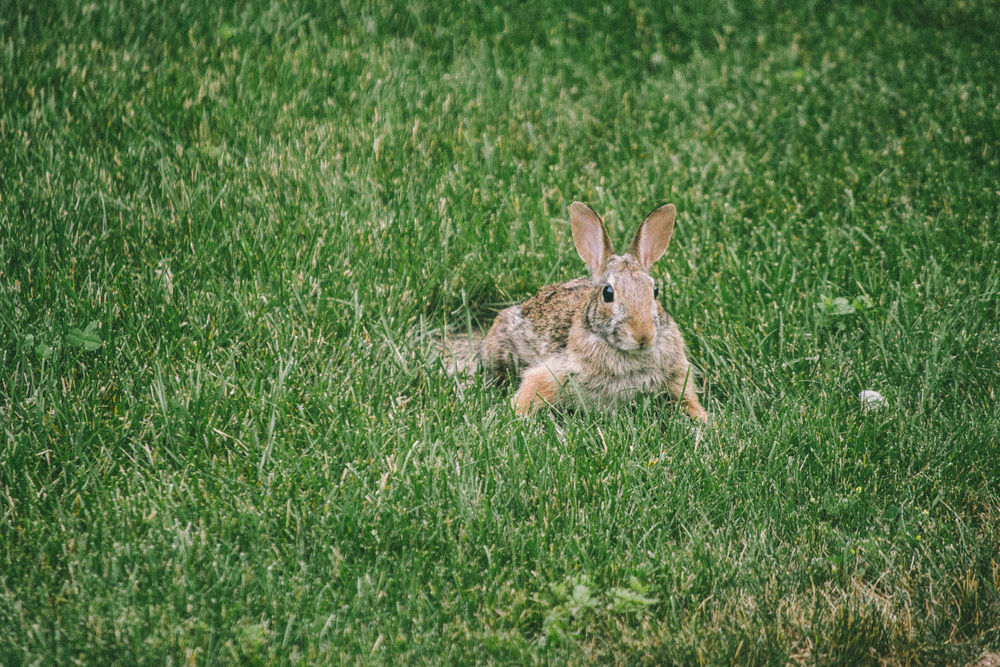 bunny-10.jpg