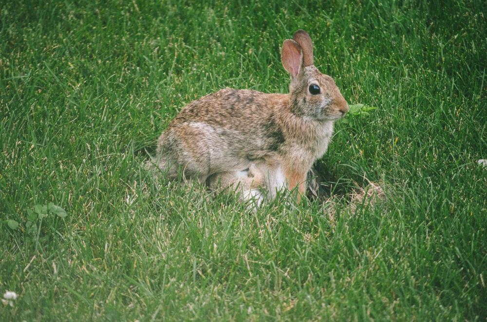 bunny-12.jpg