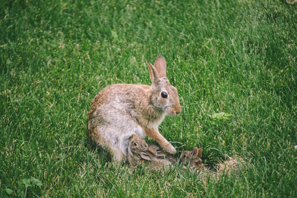 bunny-13.jpg