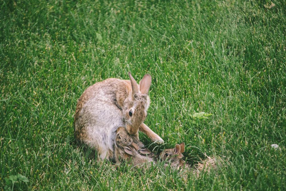bunny-14.jpg