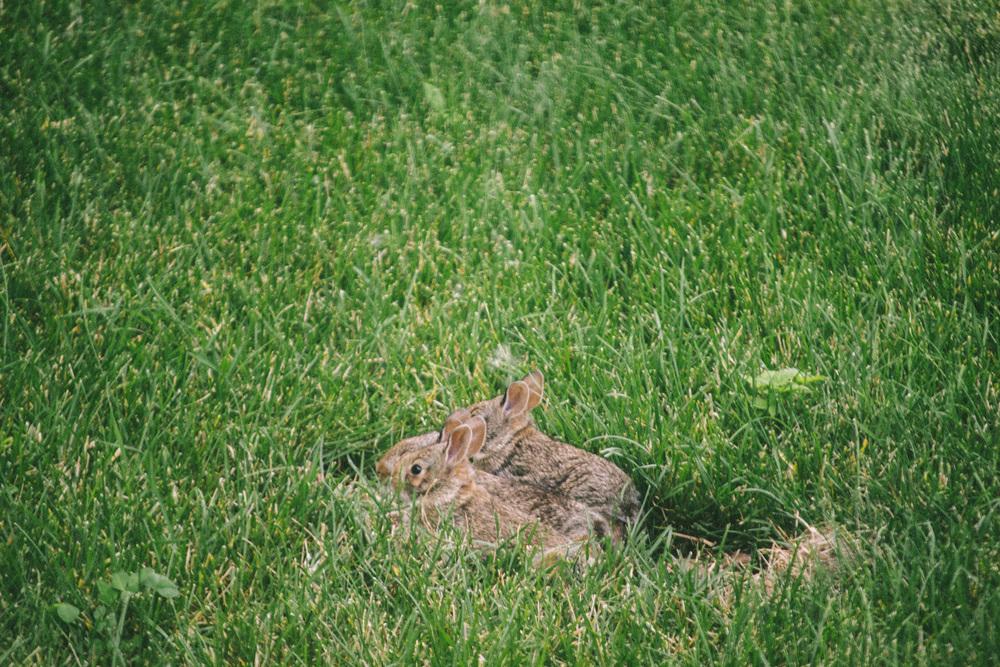 bunny-16.jpg