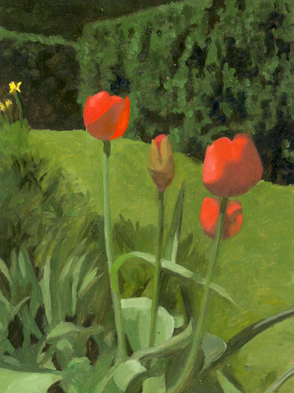 4 Tulips.jpg
