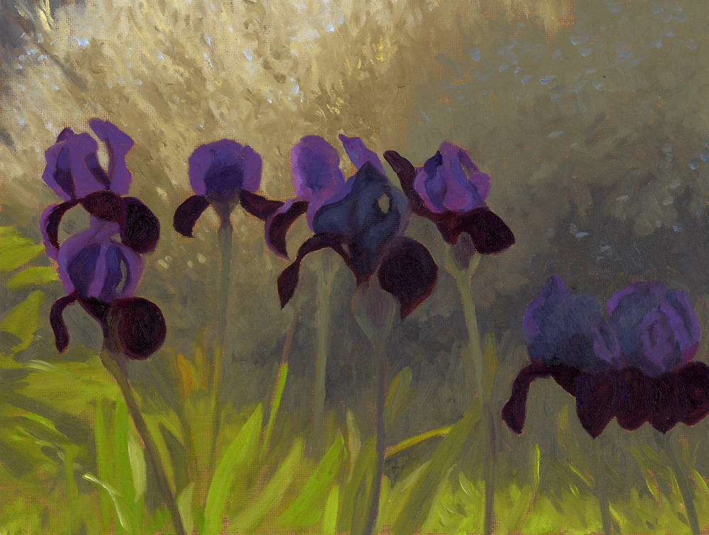IRIS IN THE EARLY MORING.jpg