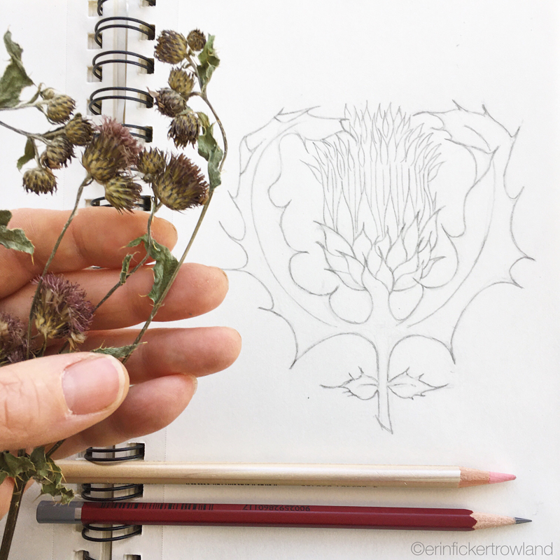 Scottish Thistle  graphic drawing inspired by pressed flowers collected on my travels