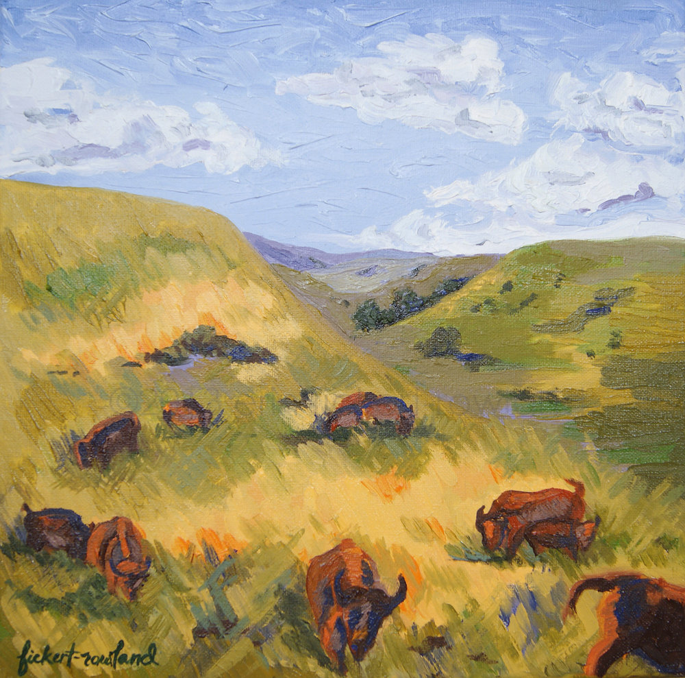The Promise of Return- Bison to Tallgrass Prairie, KS