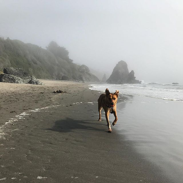 Just a dog with a ball who fell in love with the beach...