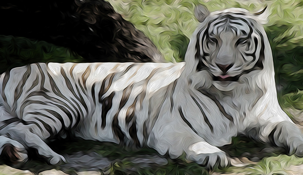 White Tiger At Rest