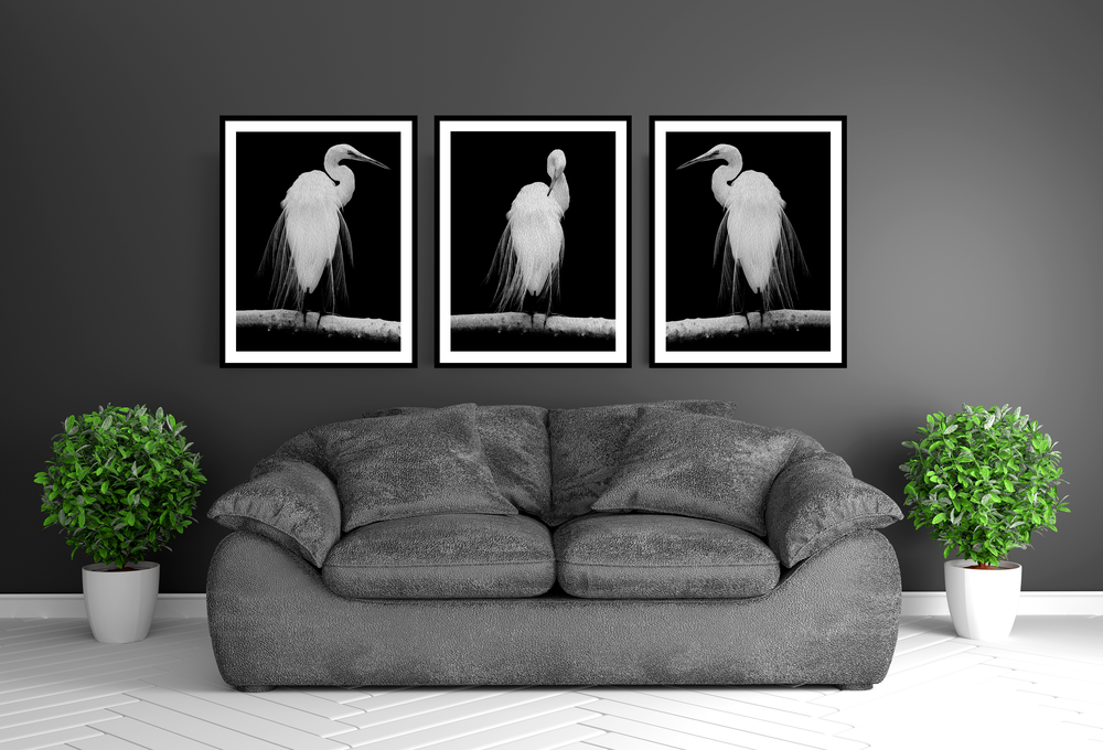 """Great Egret in Full Bloom I & II"""