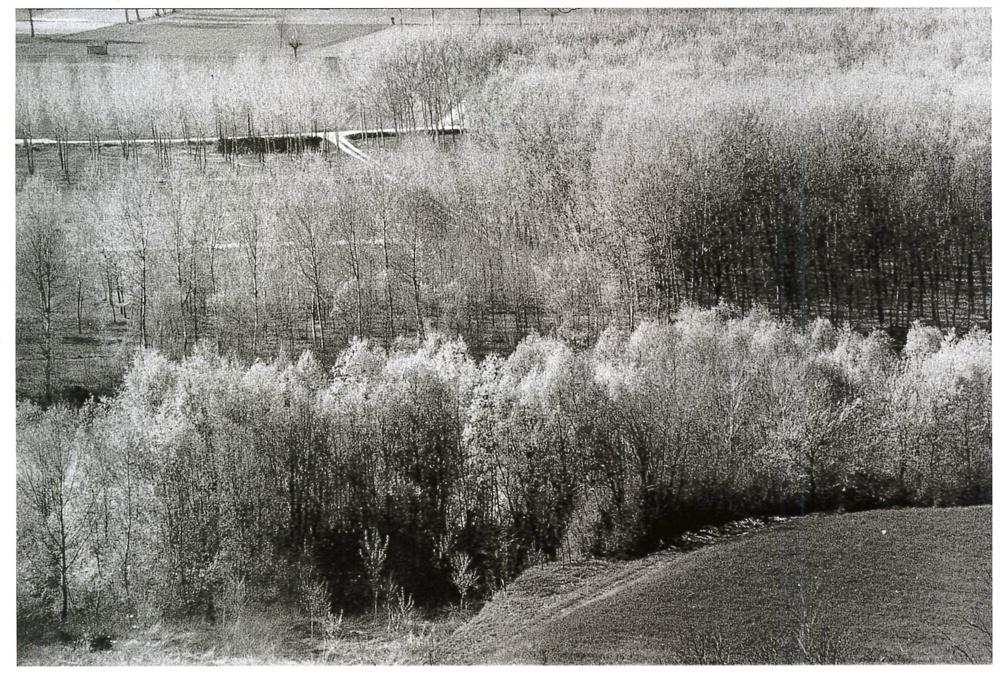 """""""Le Langhe"""". Piemonte, 1964."""