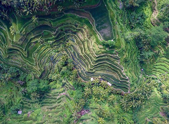 Gianyar - Tegallalang Bali. Rice fields. #dronedose