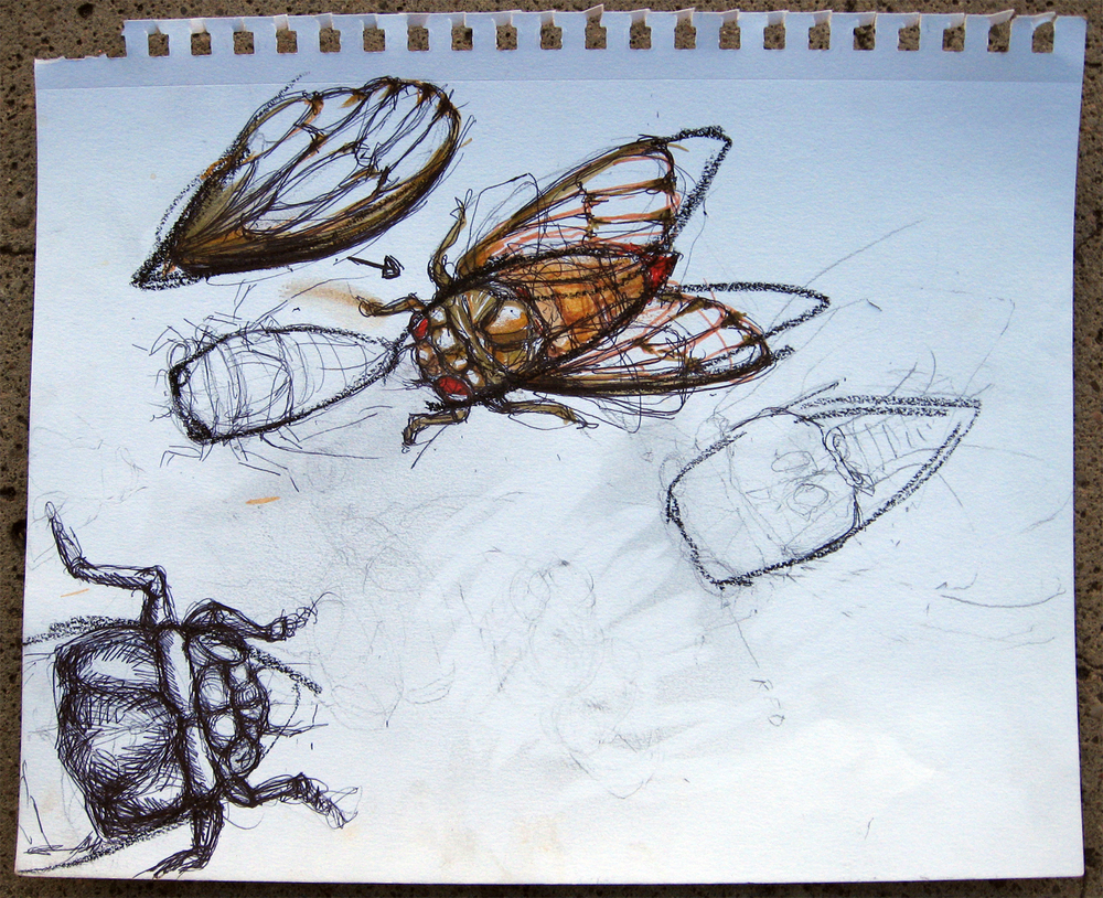 "Poe Dismuke • Cicada Study • ballpoint pen and wash • 9 x 12"" • $95 (includes tax + shipping)"