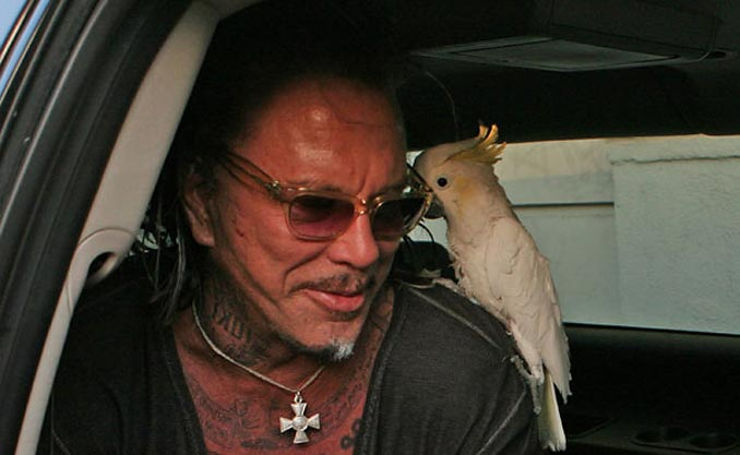 parrot_shoulder