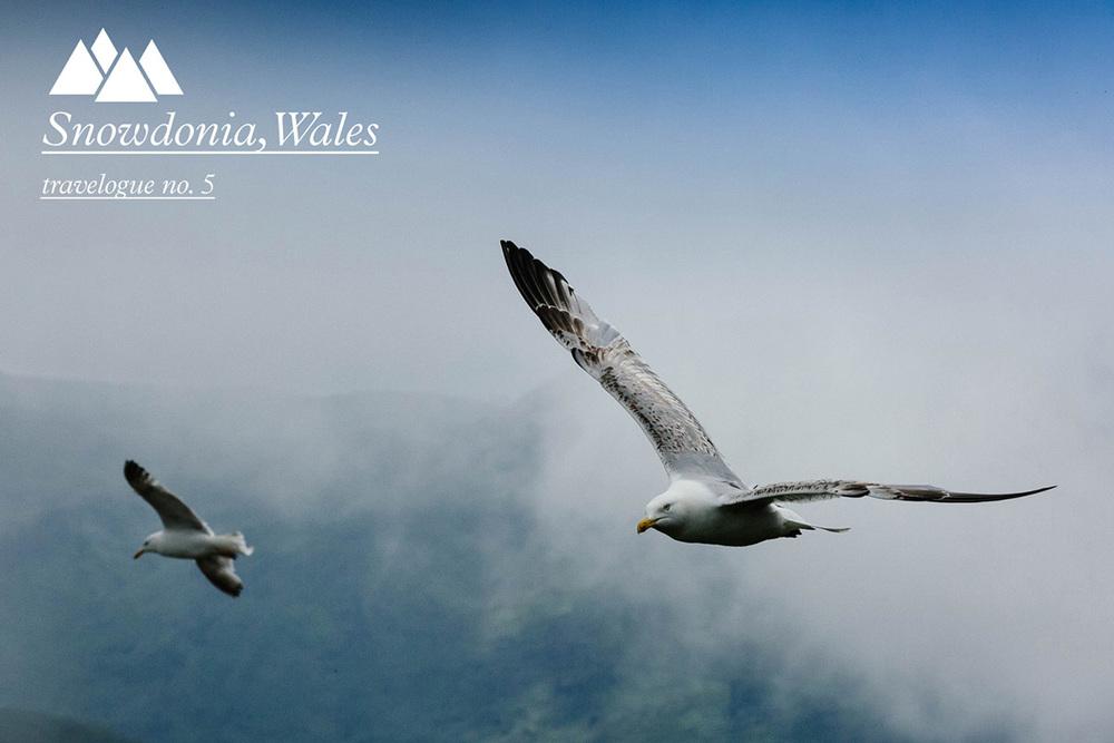 snowdonia-wales-moses-mehraban.jpg