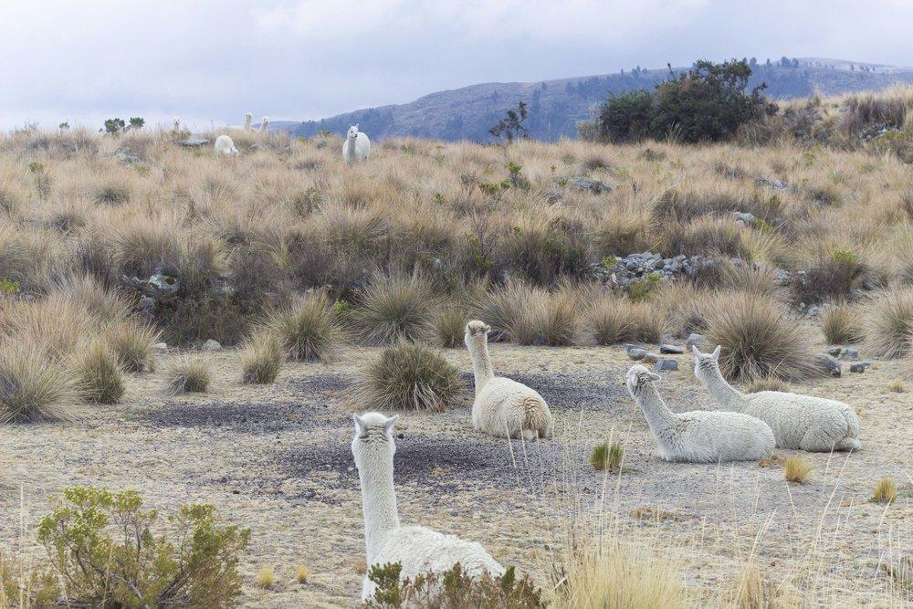 Puno- Isla Suasi12.jpg