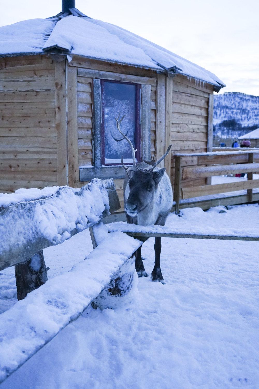 Krity S x Norway 2018_47.jpg