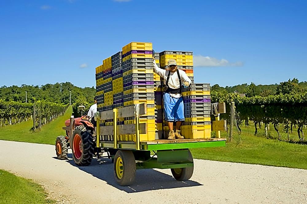 picking baskets on trailer