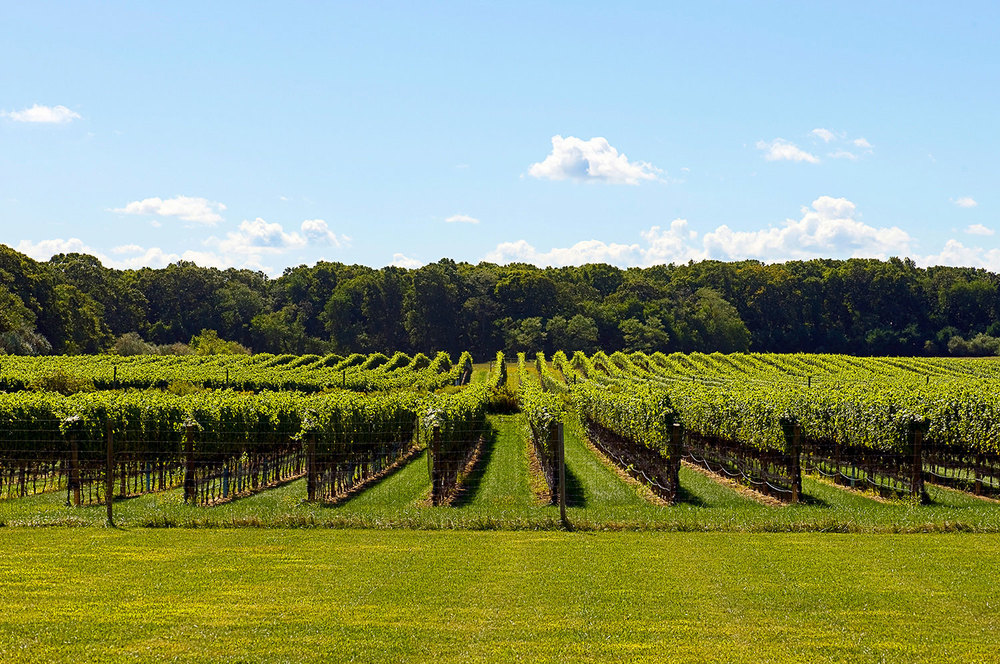 vine rows from a distance
