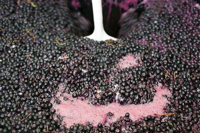 pushing down grape skin in fermentation