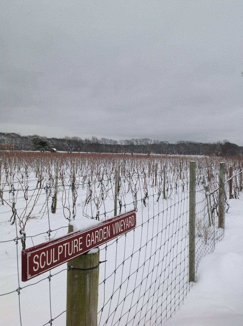 dormant vineyard in winter snow