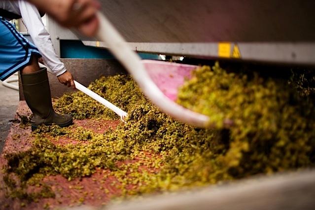 grape skins after pressing