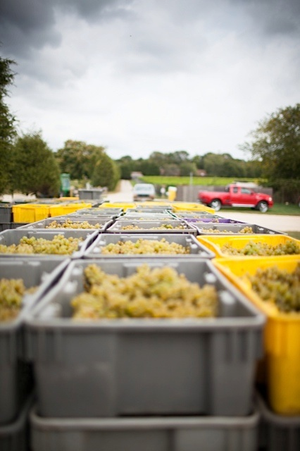 white grapes in baskets