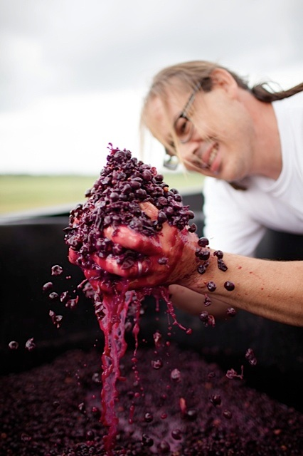 winemaker holding red grapes
