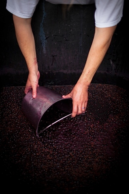 buckets of fermented red grapes