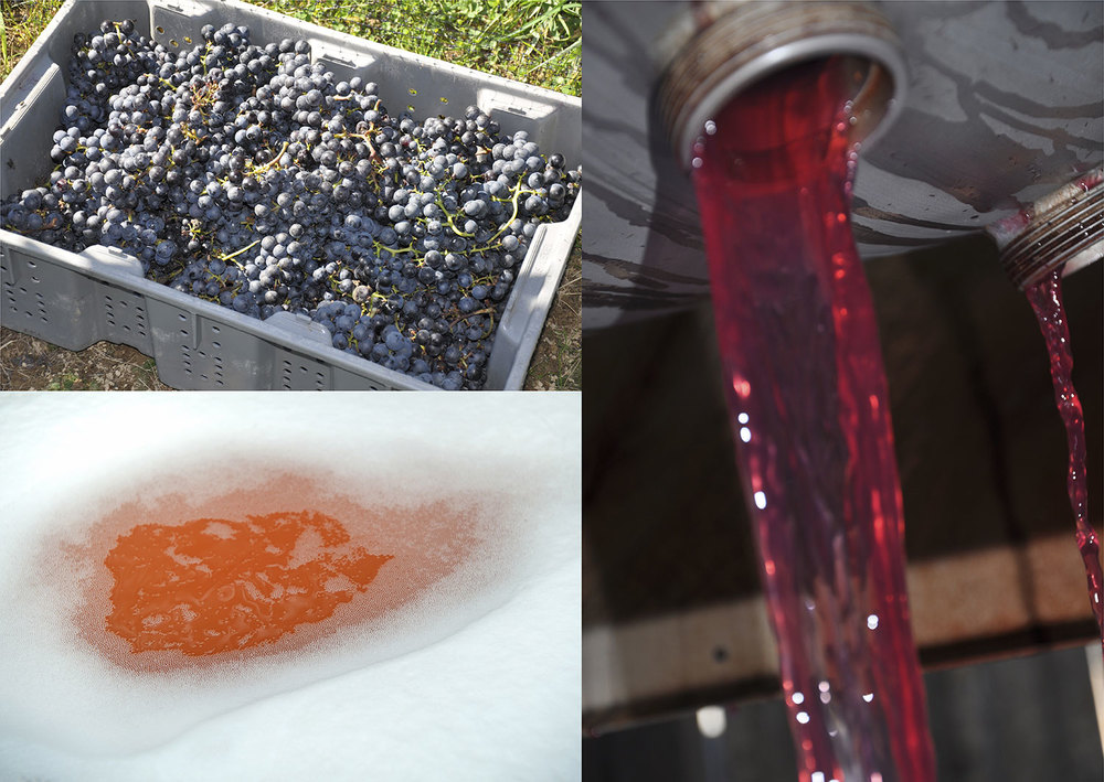 different stages of red wine pressing