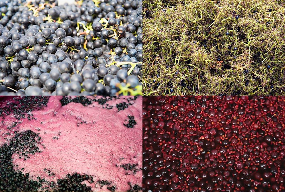 different stages of red grape processing