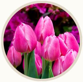 season-icon-spring.jpg