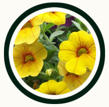 icon-annuals.jpg