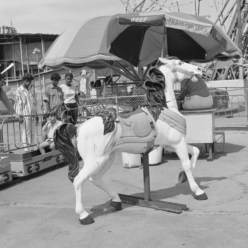 Coney Island Horse.jpg