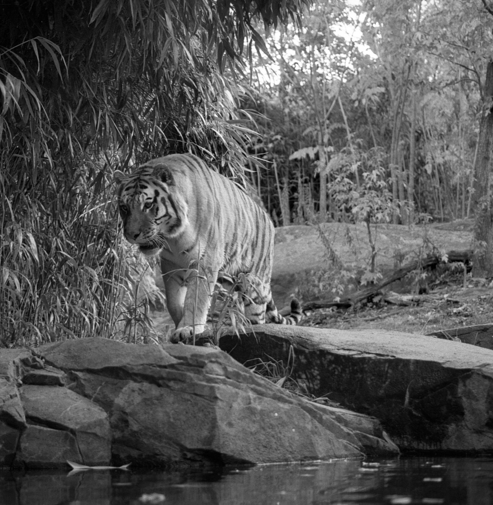 Bronx Zoo (66).jpg