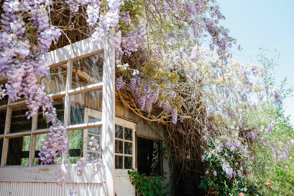 Wisteria-Perth wedding