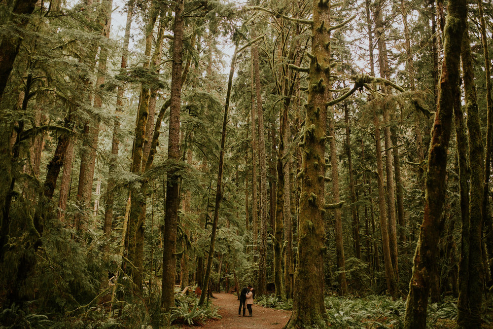 olympic national forest engagement session by breeanna lasher