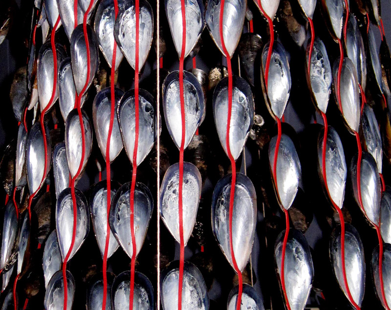 Mussel Shell Chandelier, 2016, (detail), Mussel shells, red stockings  (photo: Mark Sherwood)*