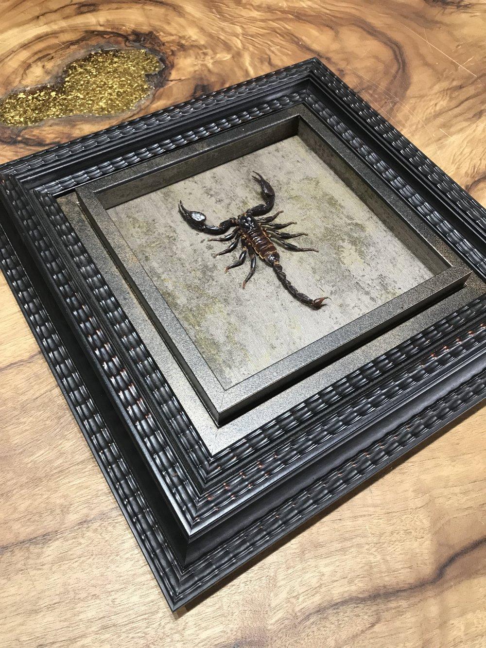 Framed Scorpian.JPG