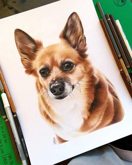Dippy the Corgi/Chihuahua mix