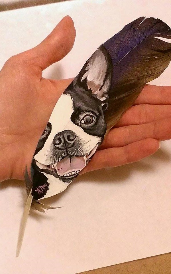 Boston Terrier on a hyacinth macaw feather