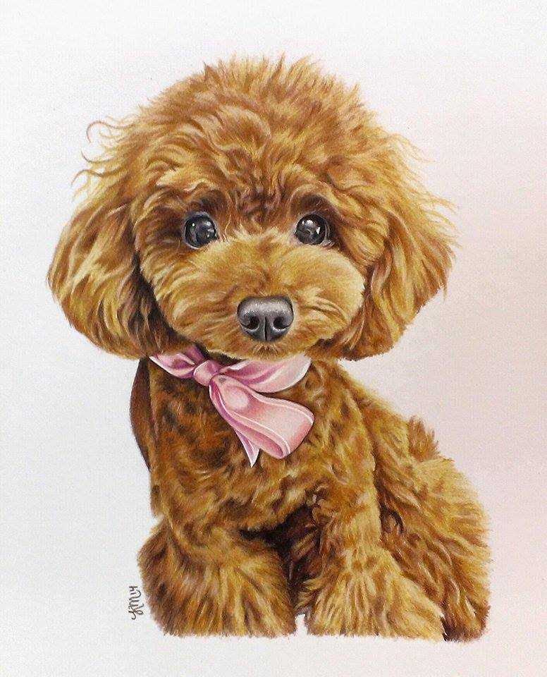 Toffee the Toy Poodle