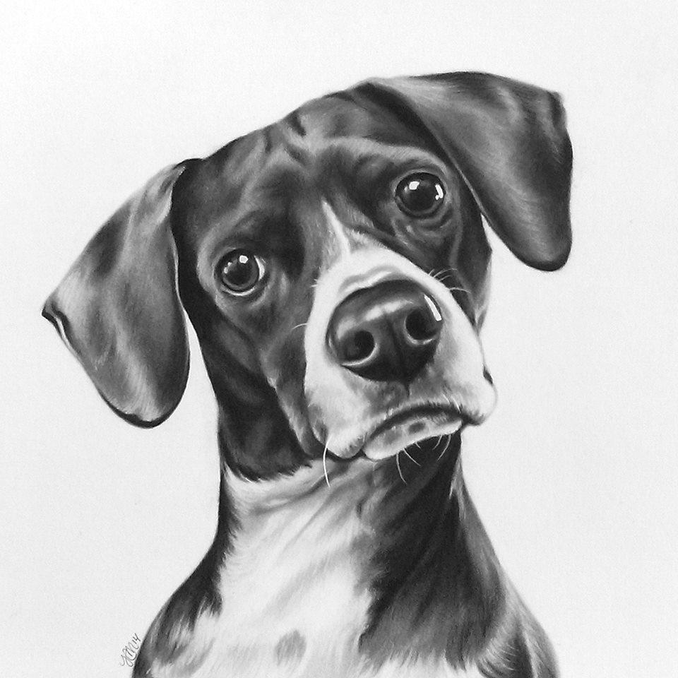 Gunther the hound mix