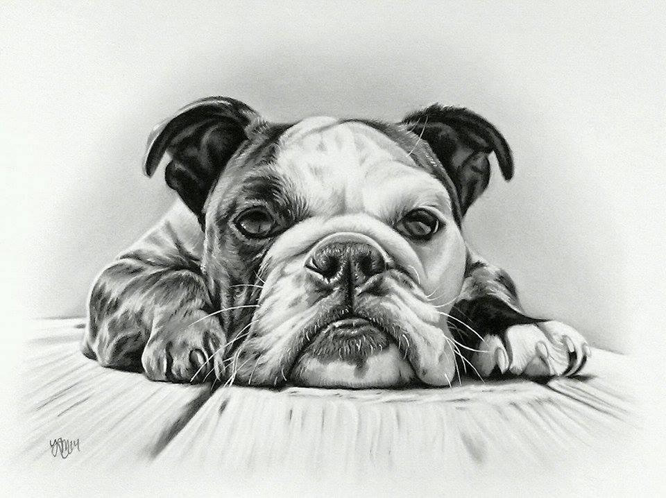 Ritz the English Bulldog