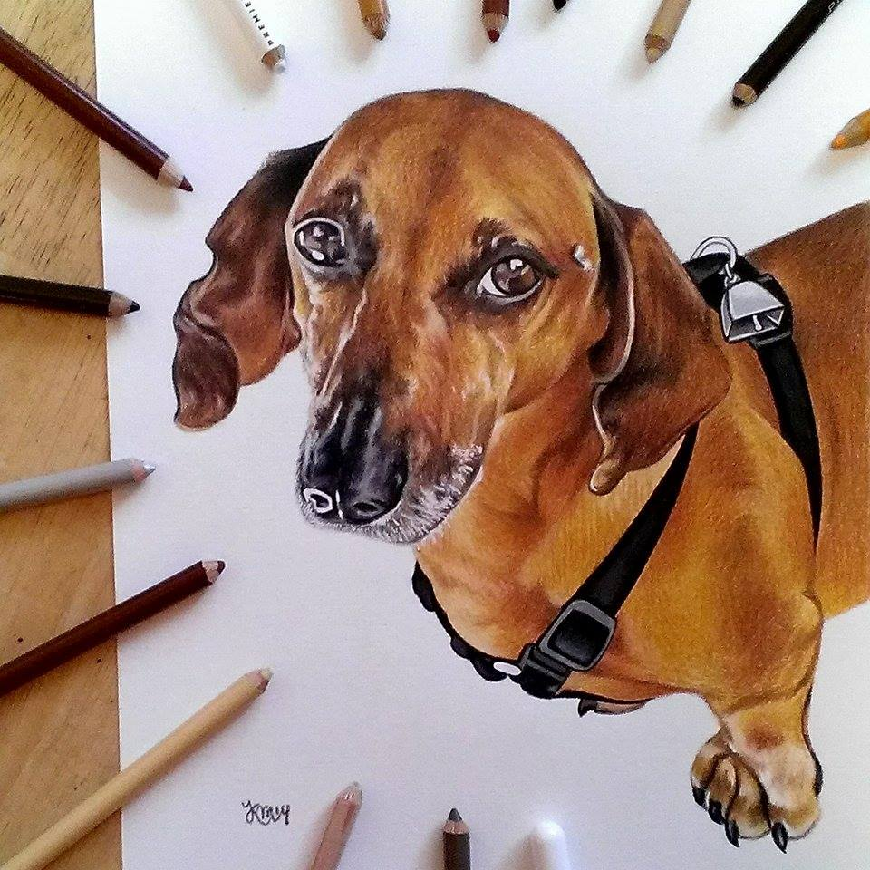 Goose the Dachshund