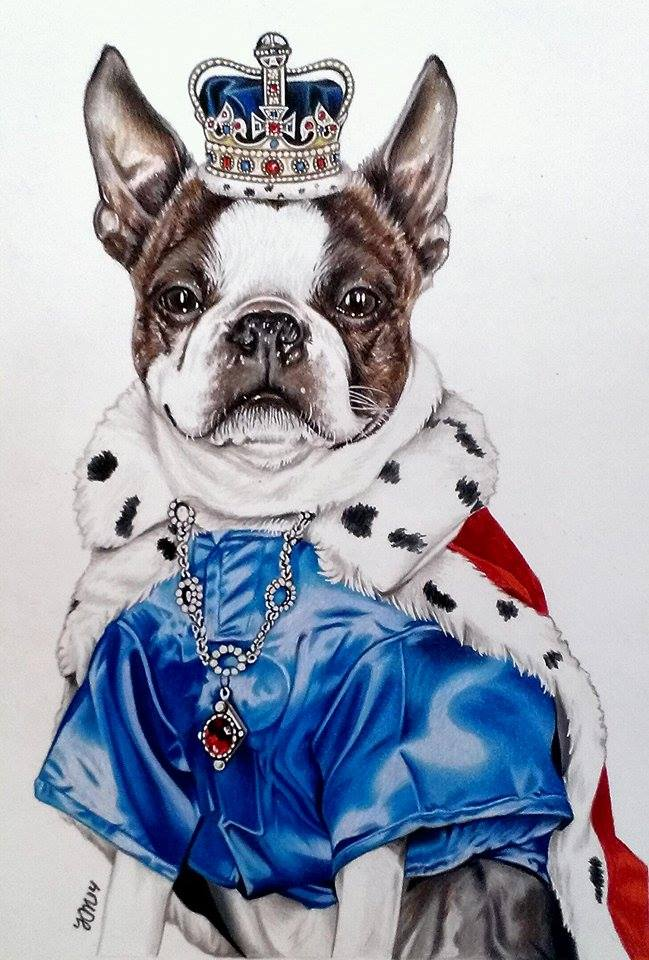 Skyler the Boston Terrier King