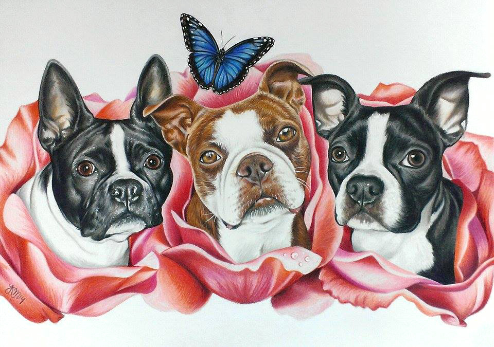 Poe, Kahlua, and Max the Boston Terriers