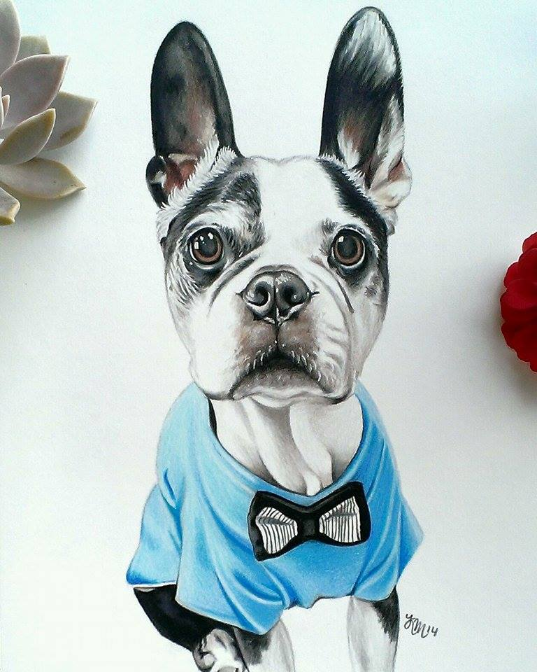 Digby the Boston Terrier