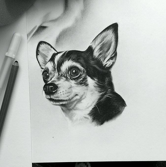 Punkin the Chihuahua