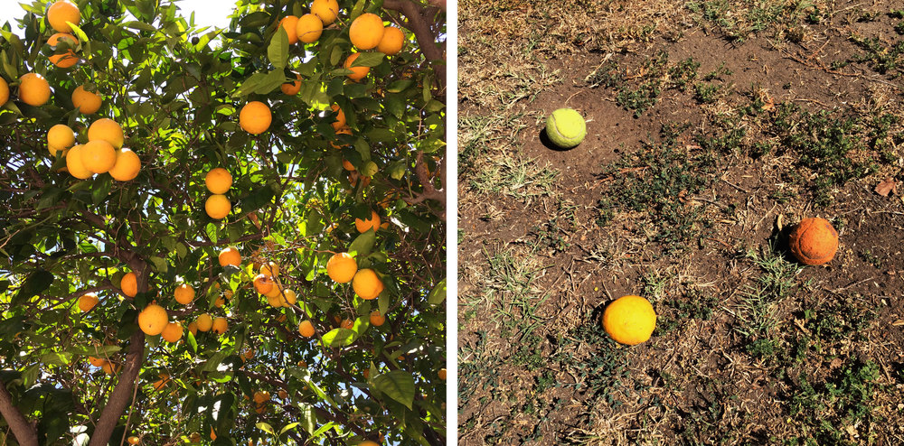 Oranges, Los Angeles (Part 1 & Part 2)