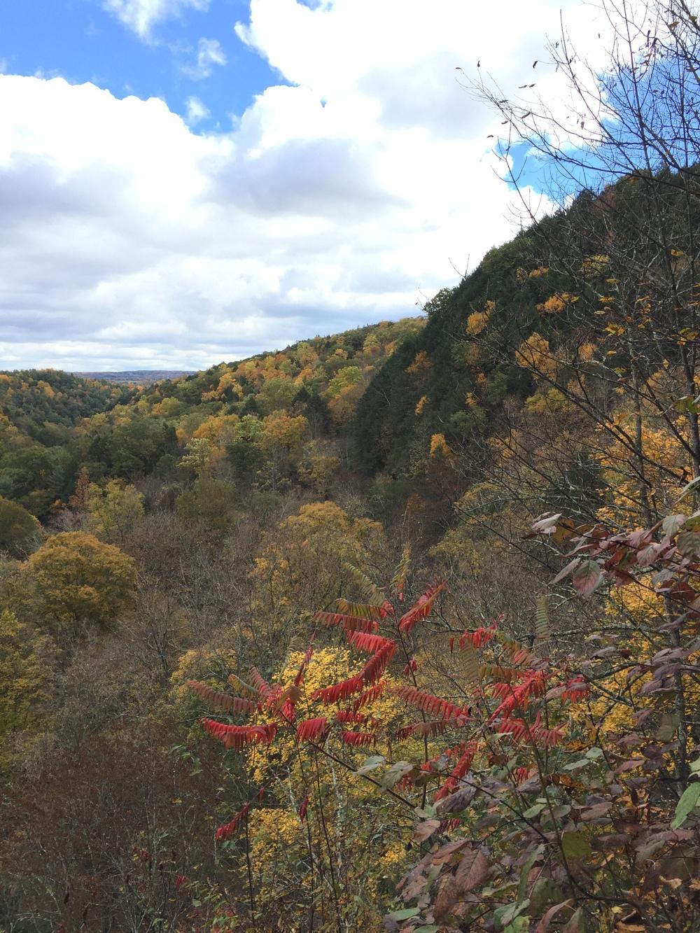 Fall Foliage (2).jpg