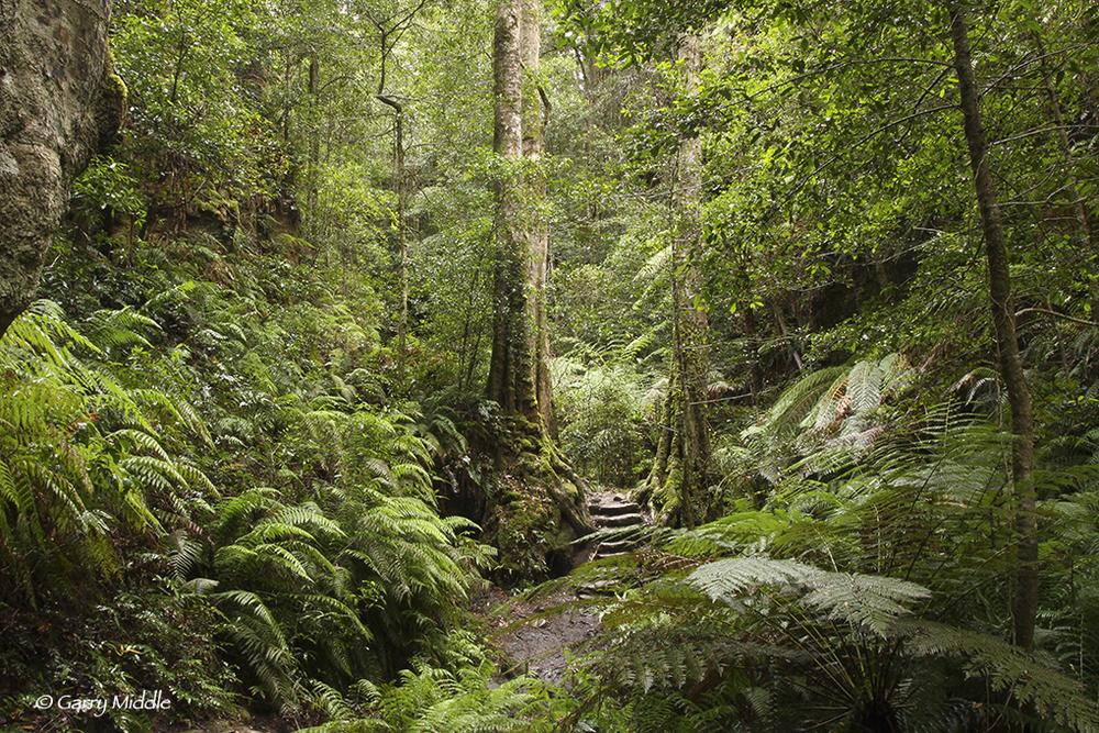 Blue Mountains rain forest.jpg